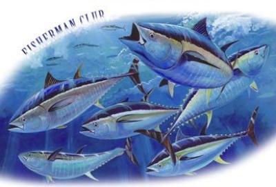 Al via la Boston Whaler Tuna Cup