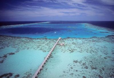 In cat tra i reef corallini del Sudan