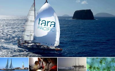 Partecipa al sorteggio di GlobeSailor e vinci un viaggio a bordo di Tara Expéditions!