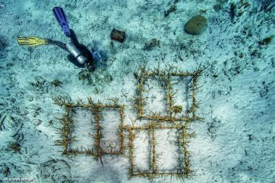 Ocean Geographic Photo Journalist 2021 Award Of Excellence, vince Lorenzo Mittiga