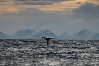 B&G a bordo di Barba nel mare artico